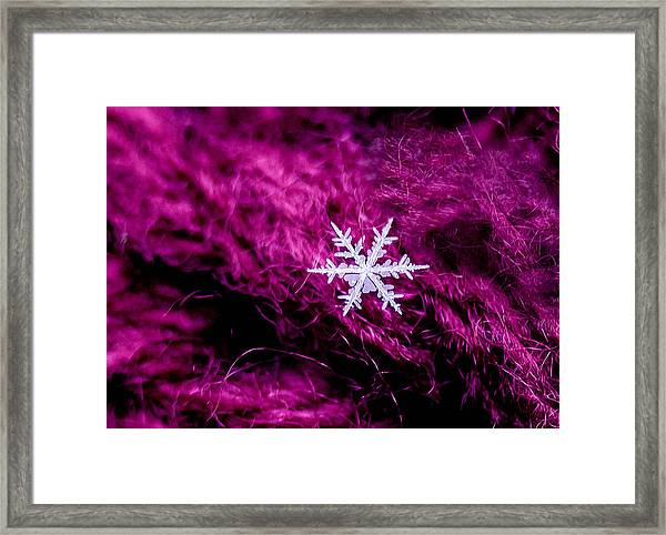 Snowflake On Magenta Framed Print