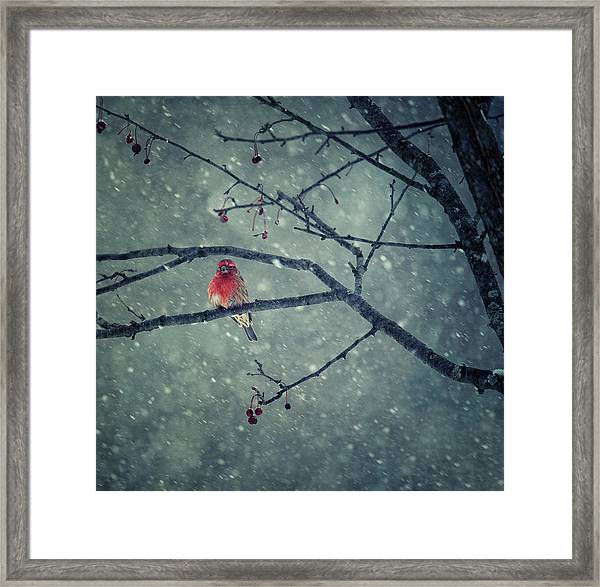 Snowing Framed Print by Yu Cheng