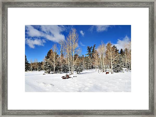 Snowy Aspen Grove Framed Print