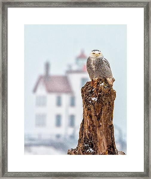Snowy Owl At The Lighthouse Framed Print