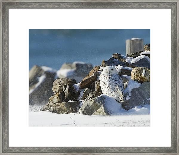 Snowy Owl On A Rock Pile Framed Print