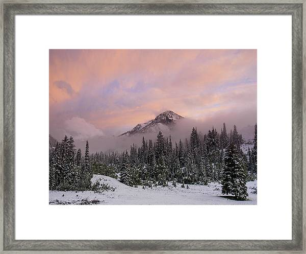 Snowy Surprise Framed Print