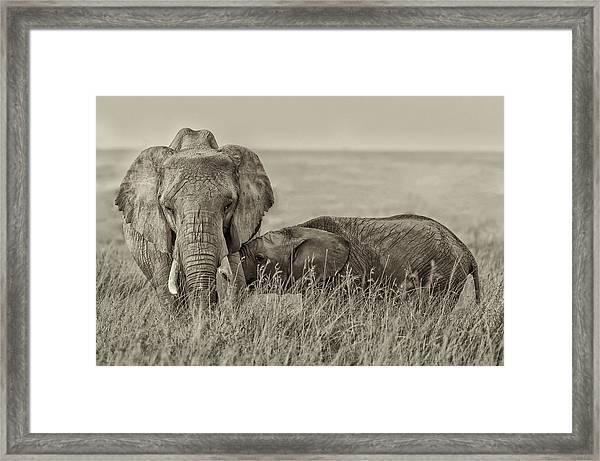 Snuggling Framed Print