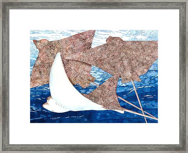 Soaring Eagle Rays Framed Print