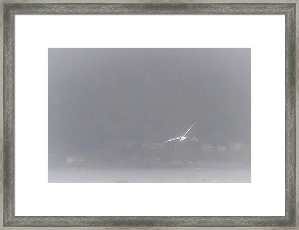 Soaring Home Framed Print