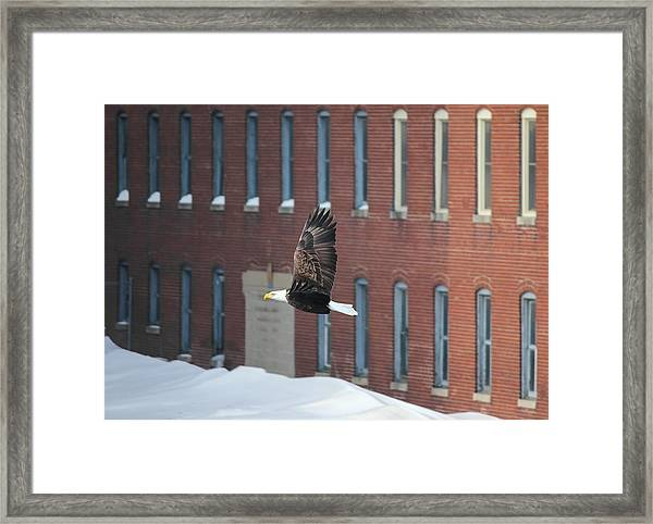Soaring To Greatness Framed Print