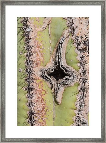 Socorro Details I Framed Print by Carolina Liechtenstein