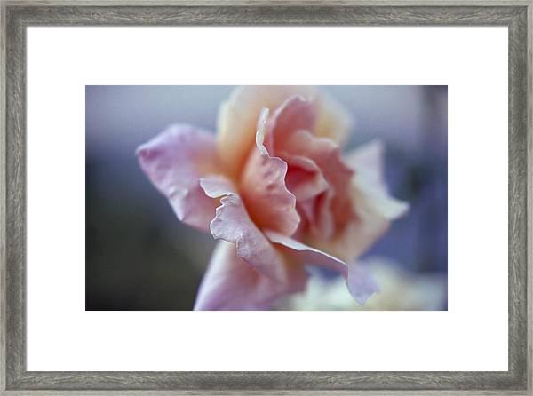 Soft Beauty Framed Print