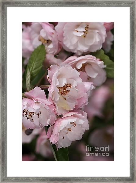 Soft Blossom Framed Print