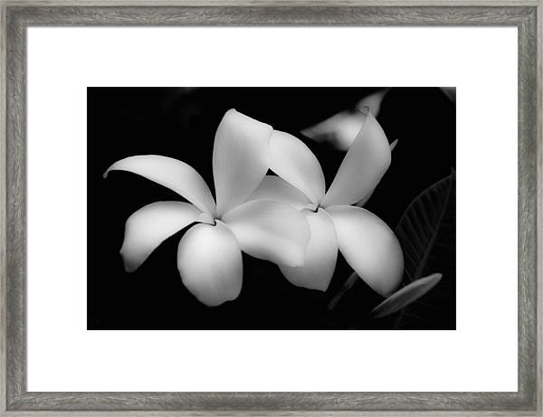 Soft Floral Beauty Framed Print