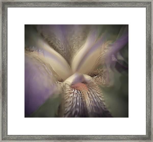 Soft Iris Flower Framed Print