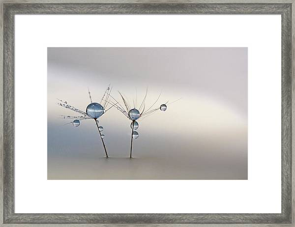 Soft Light Framed Print