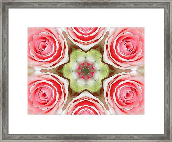 Soft Pink Rose Mandala Framed Print