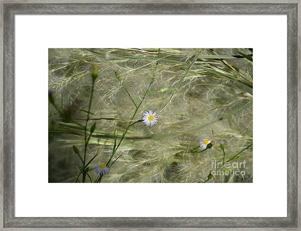 Softly Whisper Framed Print
