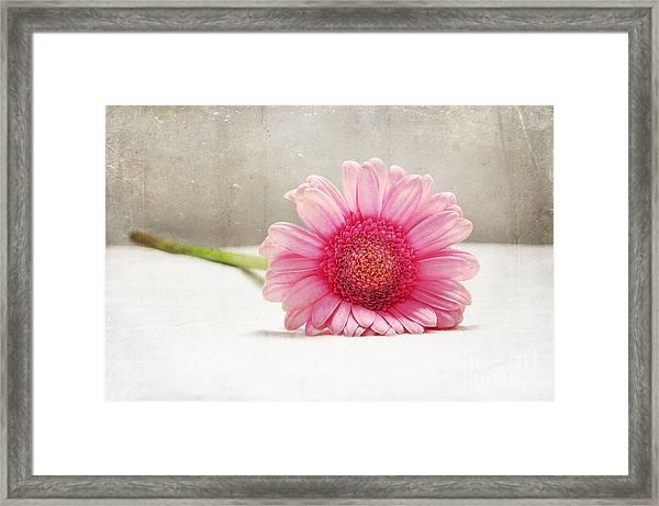 Softness In Pink Framed Print