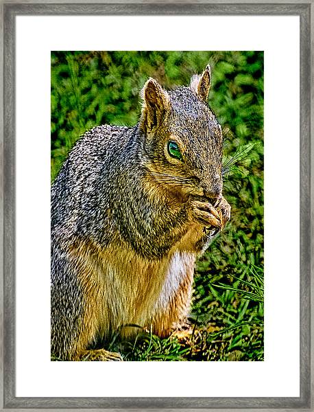 Some Squirrels Are Big Framed Print