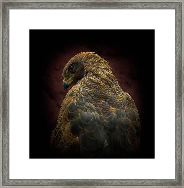 Somebody Watch Me-savanna Hawk Framed Print