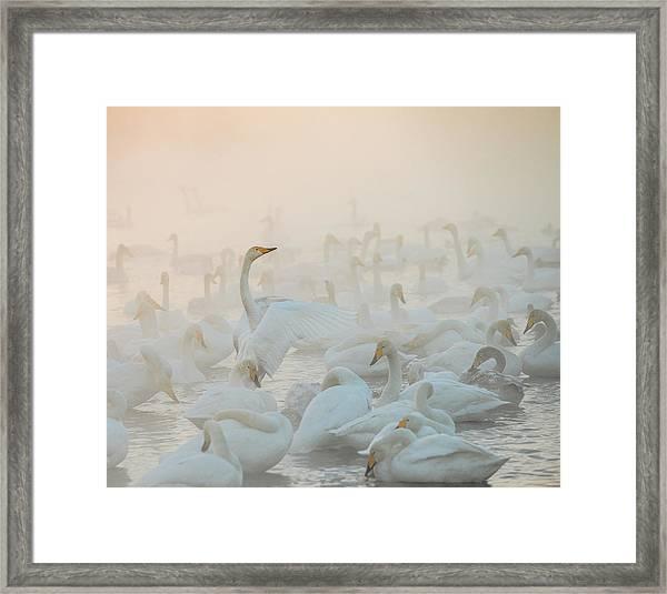 Song Of The Morning Light Framed Print by Dmitry Dubikovskiy