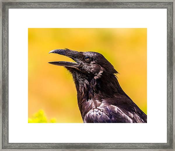 Song Of The Raven Framed Print
