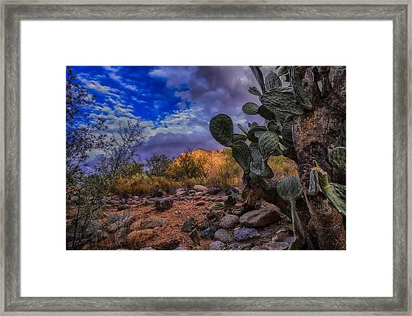 Sonoran Desert 54 Framed Print
