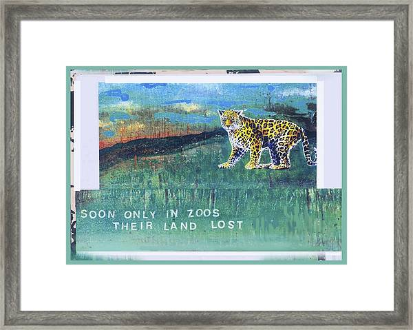 Soon Only In Zoos  Their Land Lost Framed Print