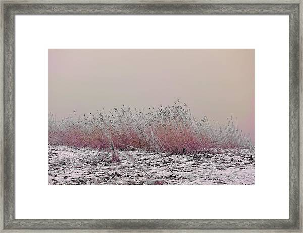 Soothing View Framed Print
