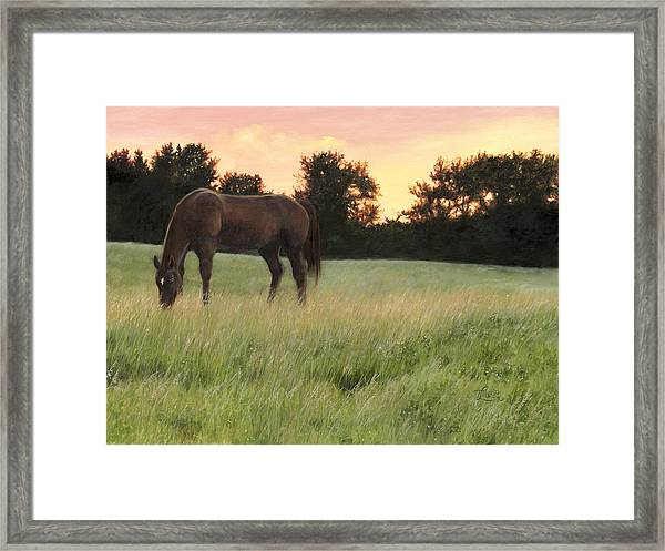 Sorrel Beauty Framed Print