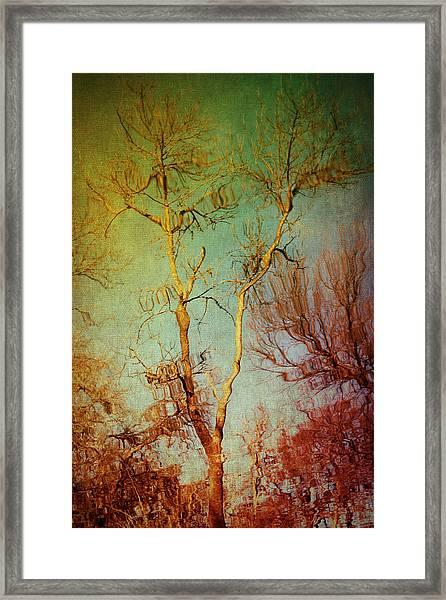 Souls Of Trees Framed Print