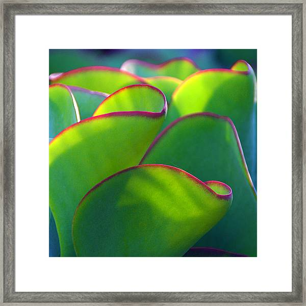 South African Beauty Framed Print