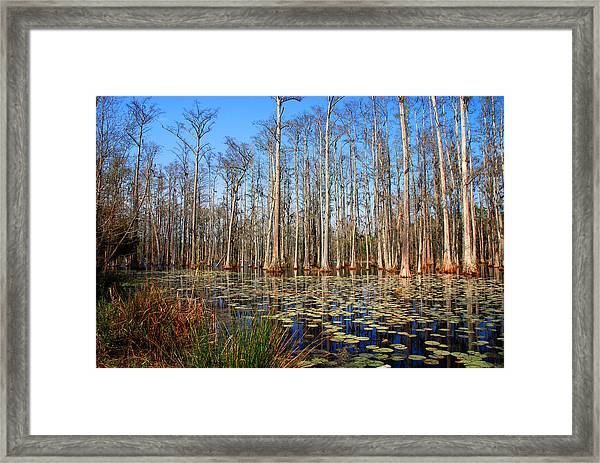 South Carolina Swamps Framed Print
