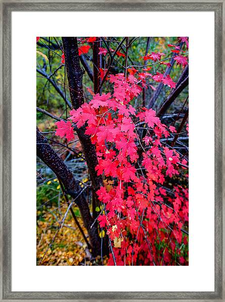 Southern Fall Framed Print