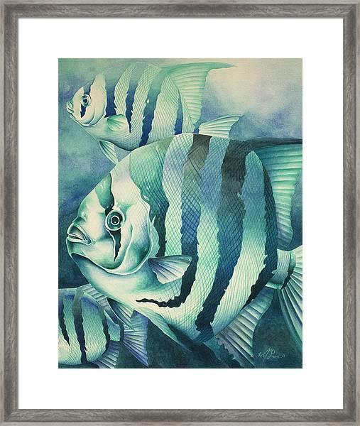 Spadefish Framed Print