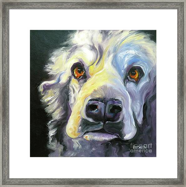 Spaniel In Thought Framed Print