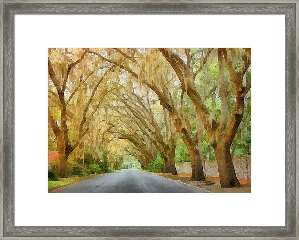 Spanish Moss - Symbol Of The South Framed Print