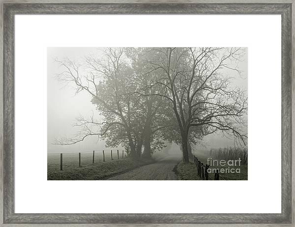 Sparks Lane Fog Framed Print