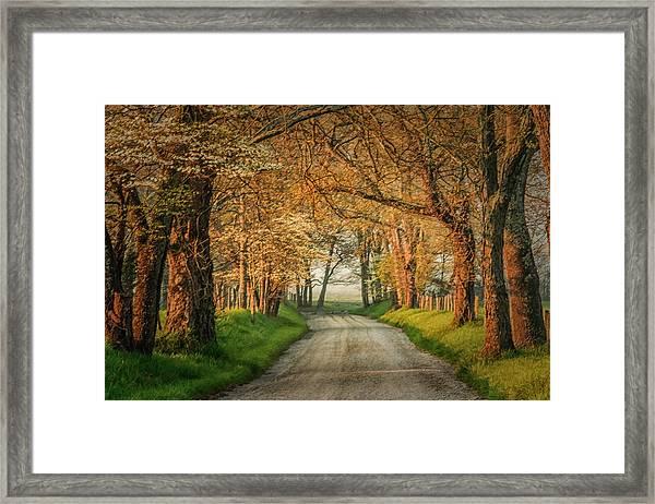 Sparks Lane Framed Print