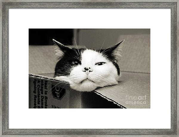 Special Delivery It's Pepper The Cat  Framed Print