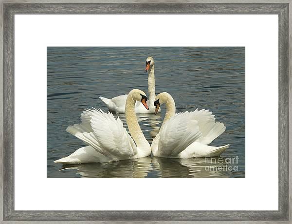 Special Kinda Love Framed Print