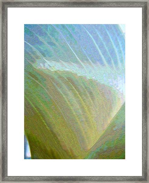 Spectrum Calla Lily  Framed Print