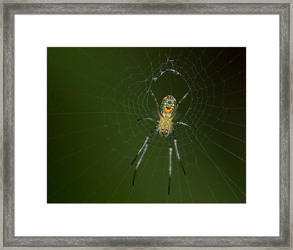 Spider In Mexico Framed Print by Brian Magnier