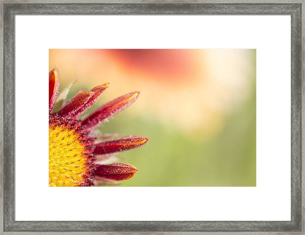 Spider's Stitch On Blanket Flower Framed Print