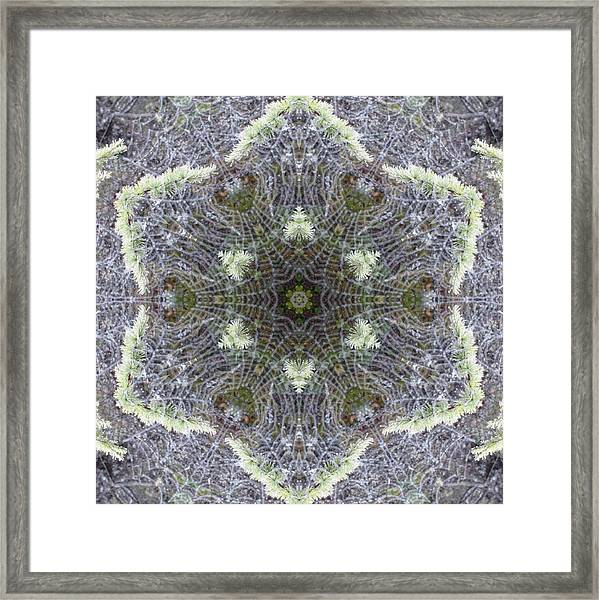 Spiderweb Pattern Framed Print