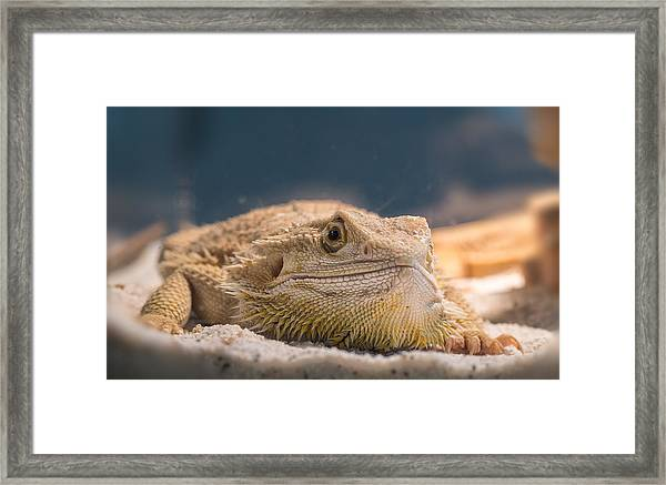 Spiked One Framed Print
