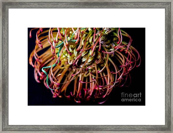 Spiky Flower Framed Print by Mina Isaac