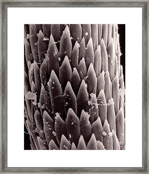 Spine Of The Cactus Framed Print