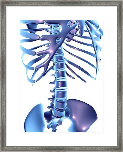 Spine Framed Print by Pasieka