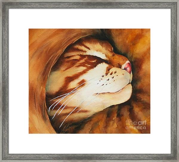 Spiral Cat Framed Print