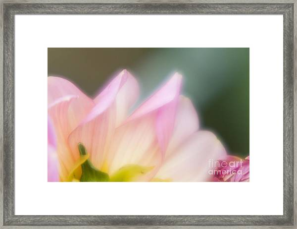 Spirit Of Flower Framed Print by Tad Kanazaki