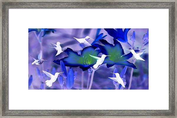 Spirit Of The Humming Bird Framed Print