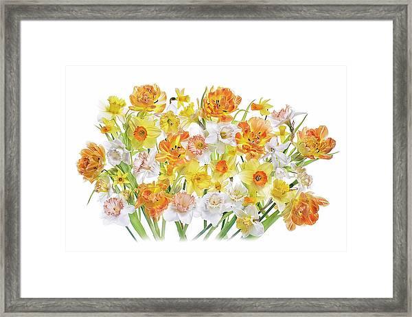 Spirited Framed Print by Jacky Parker